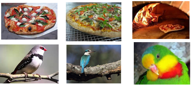 Wood-fired Pizza and Woodland Birds