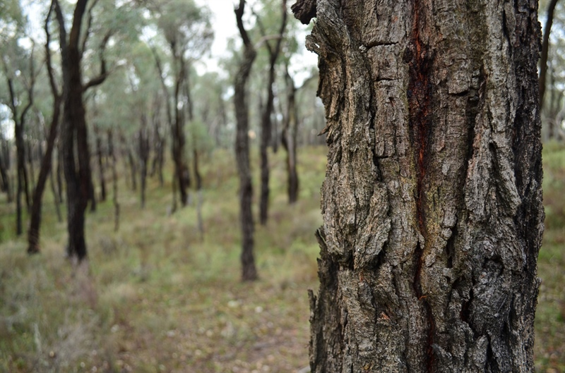 2017 Box Ironbark Ecology Course