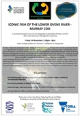 Iconic Fish of the Lower Ovens River - Murray Cod