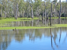 Lower Ovens Floodplain features in a new podcast