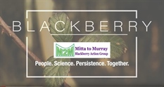 Video: Mitta to Murray Blackberry Action Group