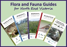 New Reptiles and Frogs Guide for North East Victoria