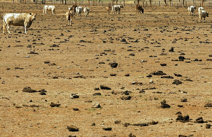 Help shape drought support -Victorian Government is asking for your feedback