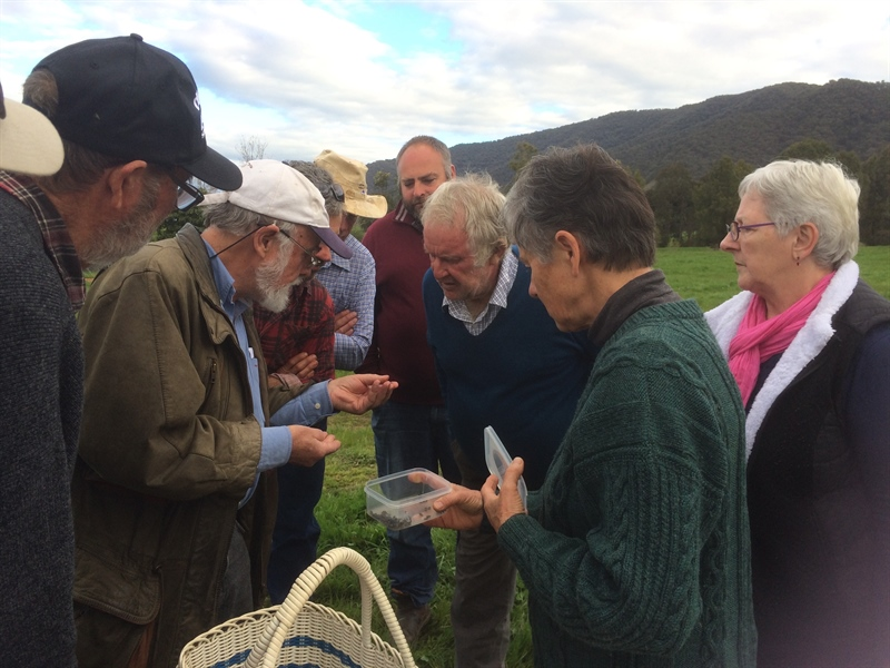 Beetlemania in the Mitta Valley