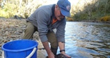 Reintroduction of Macquarie perch into the Ovens River