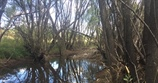 Omeo Willow Walk and Talk