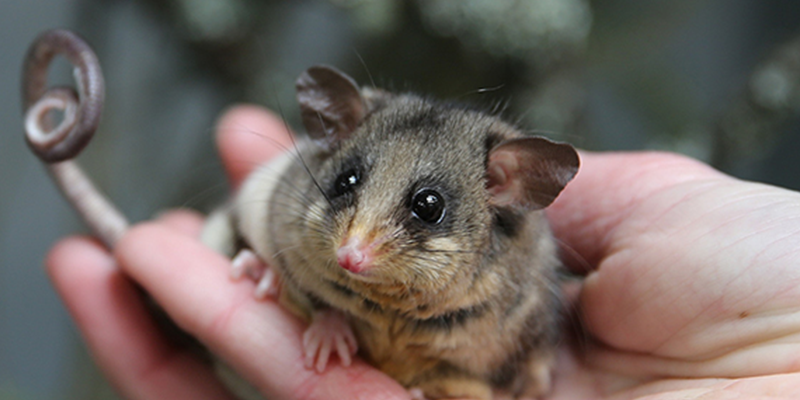 Lights Off for Moths (and Possums!)