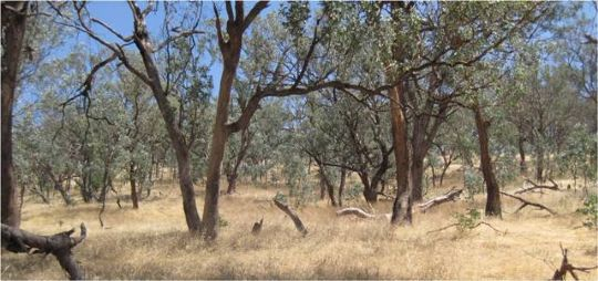 Threatened Grassy Woodlands Project
